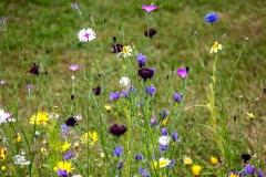 wildblumenwiese142_v-contentxl - Kopie